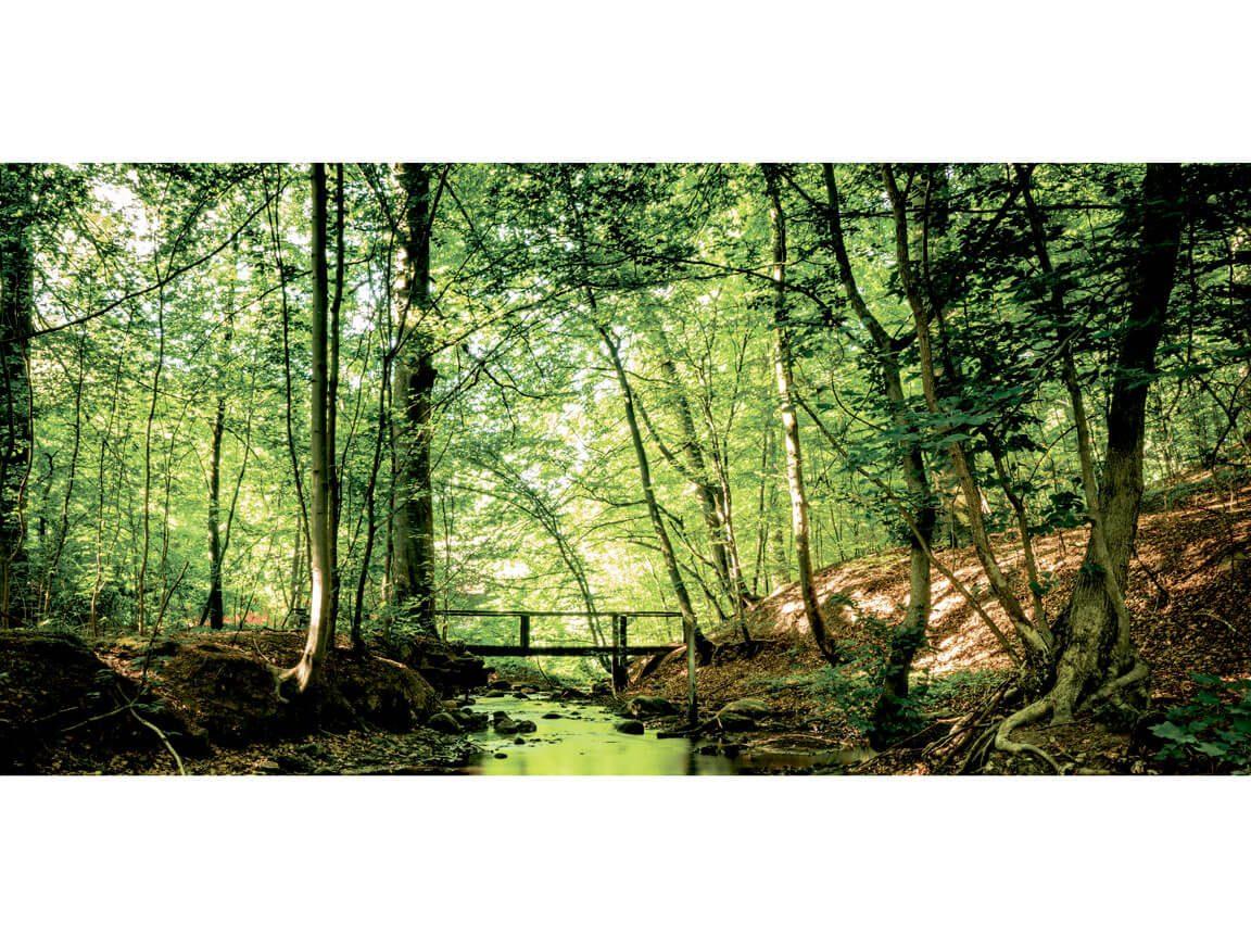 Skov - skovtur tema - banner 1. Udlejning / leje af kæmpe banner til temafest.