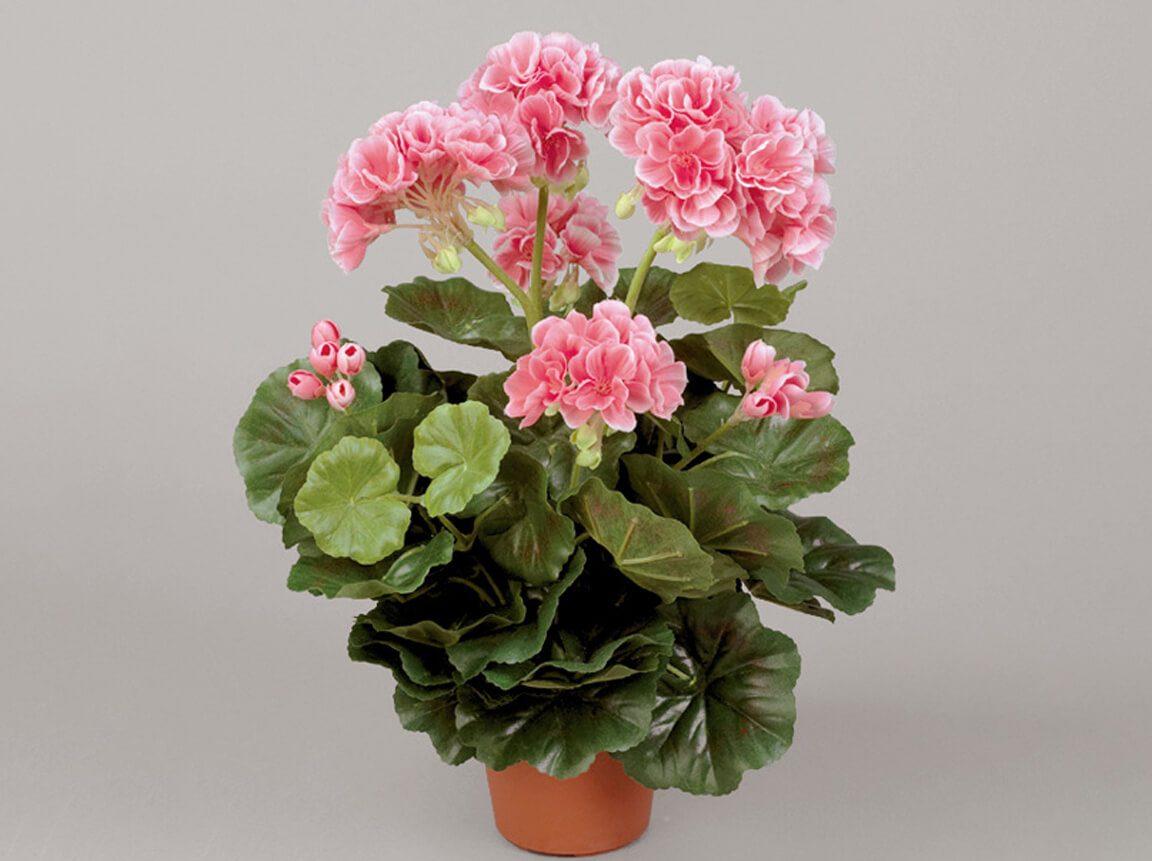 Udlejning / leje af kunstige blomster. Kunstig lyserød Geranium i potte. Meget naturtro. Lejepris pr. dag kr. 40,-