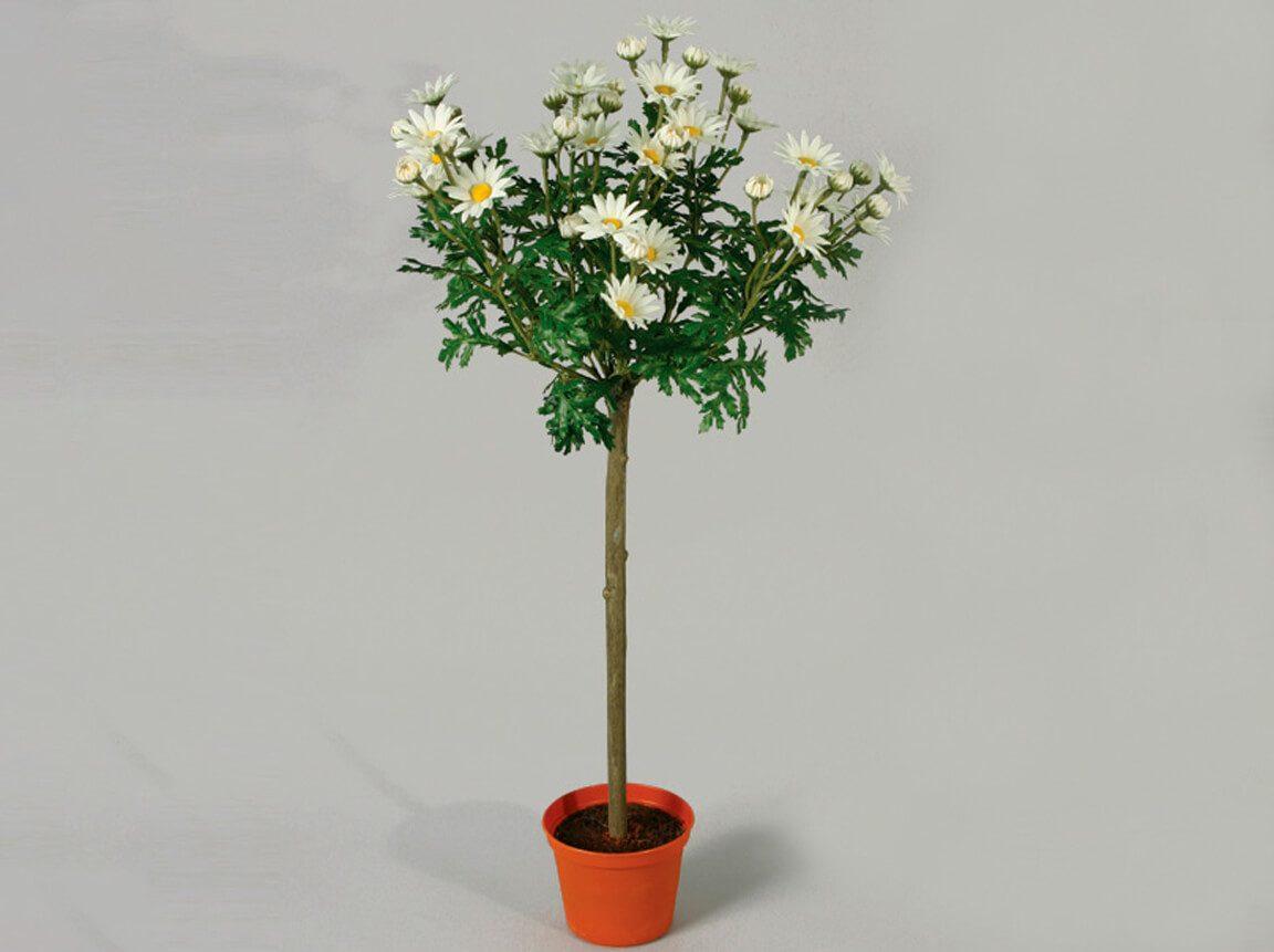 Udlejning / leje af kunstige blomster. Flot naturtro kunstig opstammet Marguerit. Lejepris pr. dag kr. 50,-