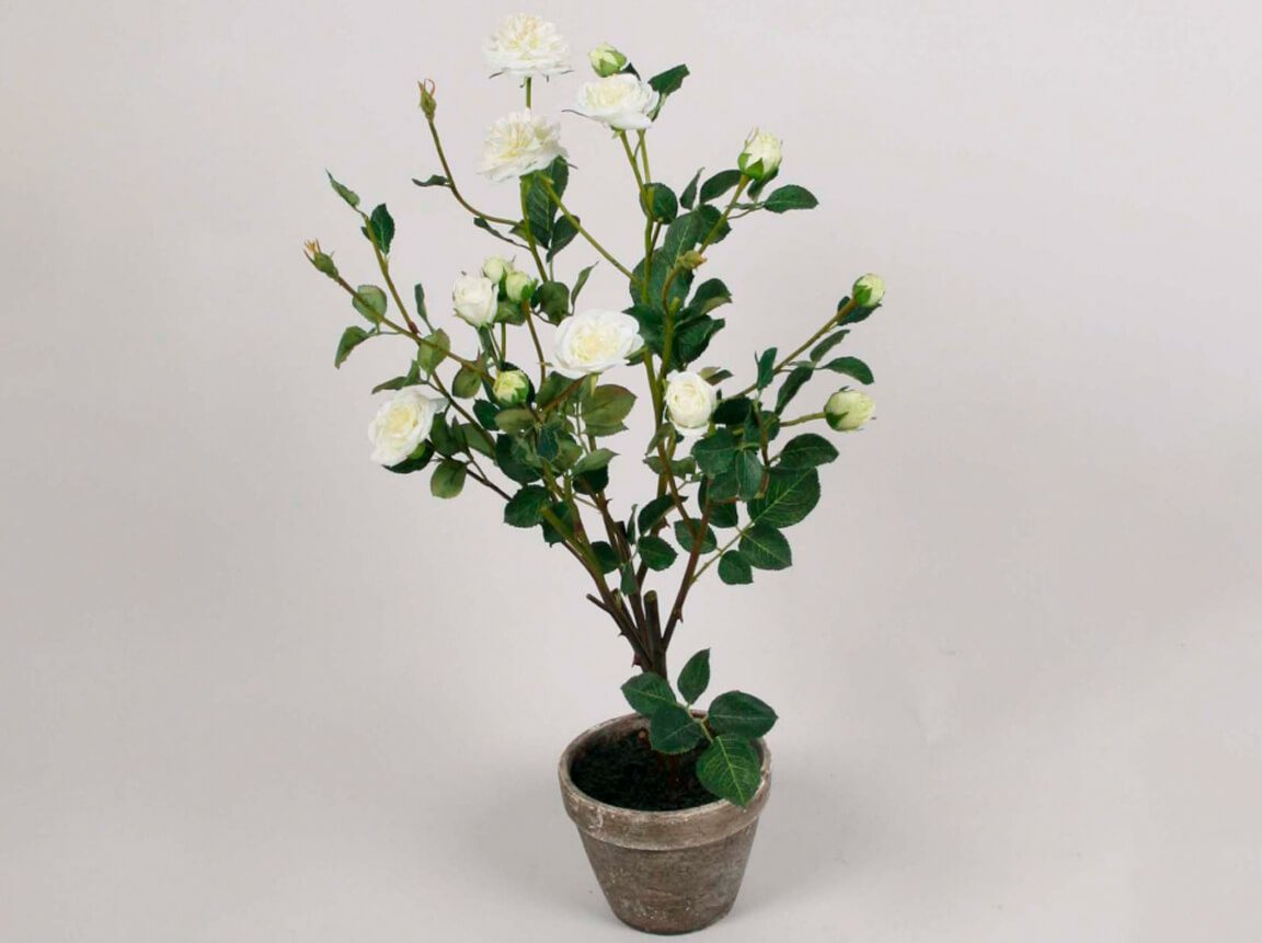 Udlejning / leje af kunstige blomster. Stor, flot og naturtro hvid rose i potte. Lejepris pr. dag kr. 50,-