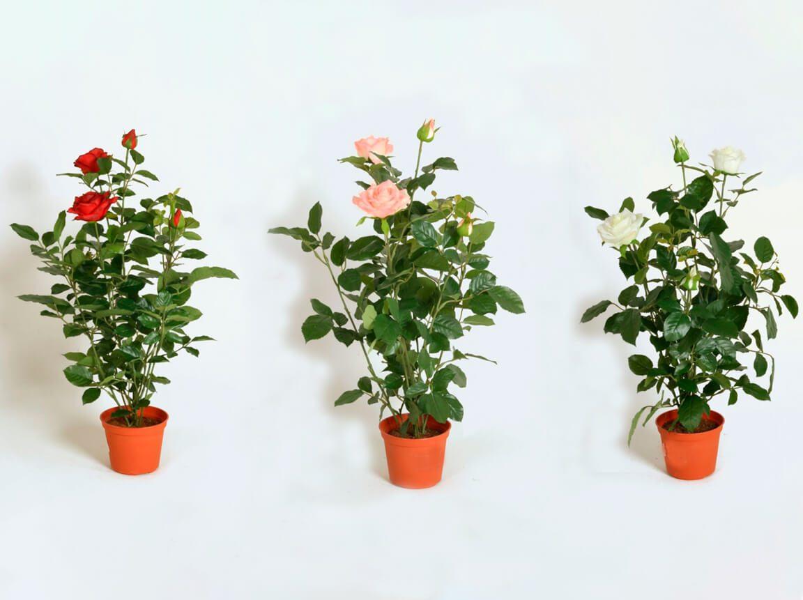 Udlejning / leje af kunstige blomster. Fantastisk naturtro kunstige roser i forskellige farver. Lejepris pr. dag kr. 45,-